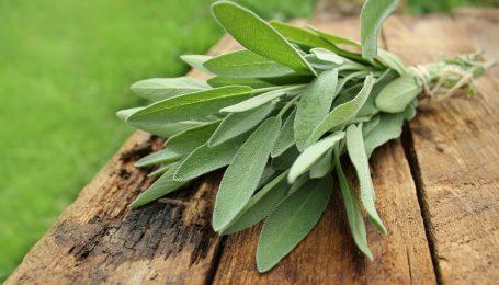 Alunga energia negativă din casa! 8 plante care vor alunga energia negativă din casa ta 2